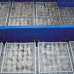 biologicheskaja zagruzka10 150x150 Тонкослойные модули